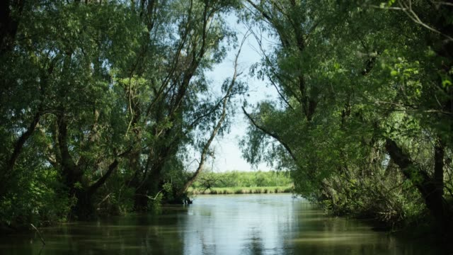 camera travels down tree lined river - river danube stock videos & royalty-free footage