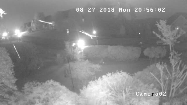 vidéos et rushes de cctv camera view of spider web and car driving at night - captive animals