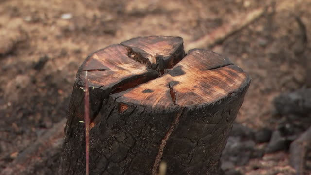 vídeos de stock, filmes e b-roll de camera zoom establishing shot of a charred tree trunk at an amazon rainforest in hondona brazil - business or economy or employment and labor or financial market or finance or agriculture