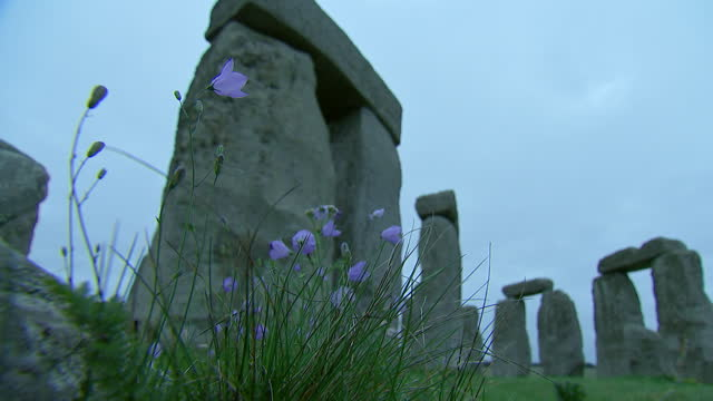 camera zoom out from a standing stone to a purple flower at stonehenge on august 28, 2018 in wiltshire, england. - music or celebrities or fashion or film industry or film premiere or youth culture or novelty item or vacations stock videos & royalty-free footage