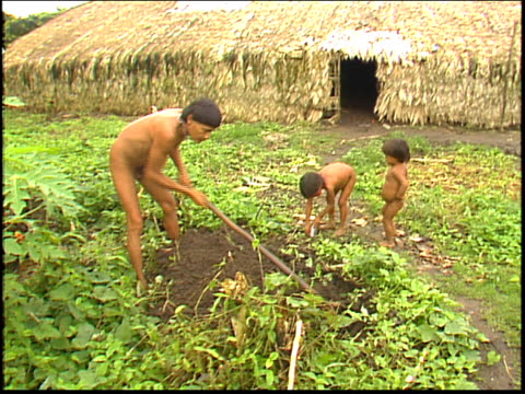 vídeos y material grabado en eventos de stock de camera zooms out from a traditional maloca dwelling to a yanomami indian man hoeing - tribu sudamericana