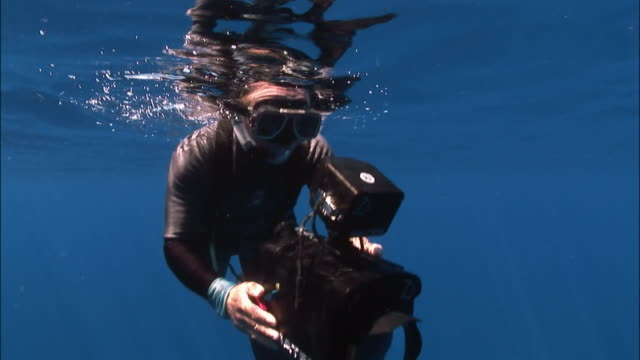 cameraman filming underwater at water's surface / diving / tonga, south pacific - goggles sportswear stock videos and b-roll footage