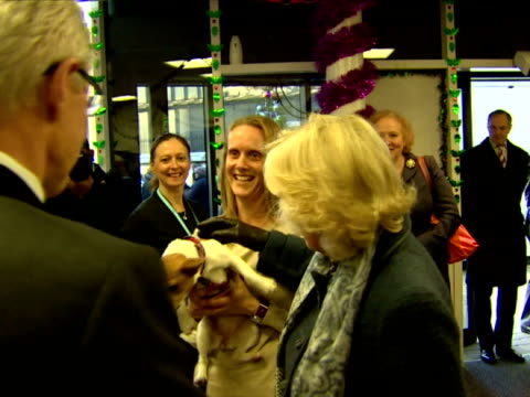 stockvideo's en b-roll-footage met camilla duchess of cornwall meets and greets paul o'grady they have a lovely chat with her dogs duchess of cornwall visits battersea dogs cats home... - paul o'grady
