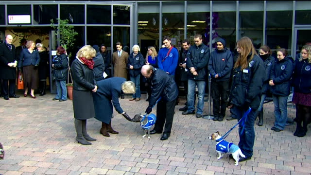 camilla duchess of cornwall visits battersea cats and dogs home close shot of dog wearing blue battersea dogs and cats home coat camilla giving treat... - dog coat stock videos and b-roll footage
