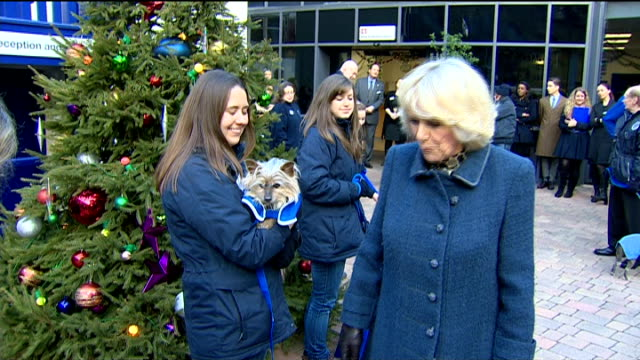 camilla duchess of cornwall visits battersea cats and dogs home camilla visit more of camilla chatting with volunteers and petting dogs / camilla... - paul o'grady stock-videos und b-roll-filmmaterial