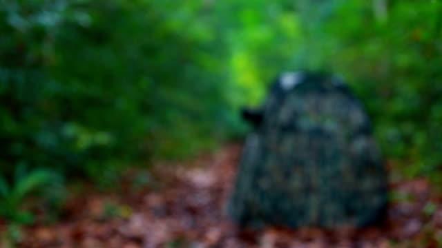 camouflage-zelt vogel fotografie - tarnung stock-videos und b-roll-filmmaterial
