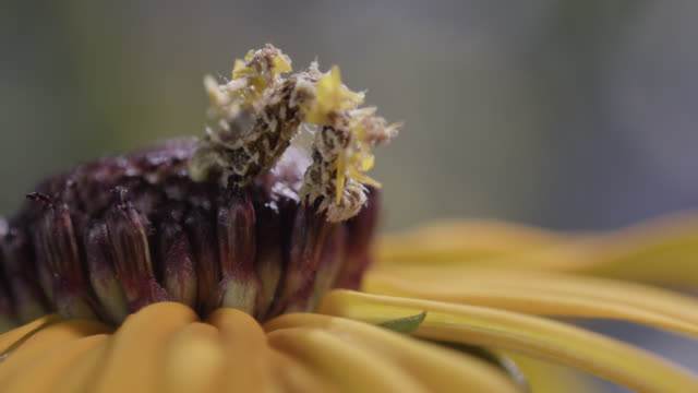 camouflaged caterpillar with attached petals - tarnung stock-videos und b-roll-filmmaterial