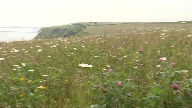 campaign for dame vera lynn statue on white cliffs of dover; england: kent: dover: ext wildflower meadow near white cliffs of dover - renamed dame... - meadow stock videos & royalty-free footage