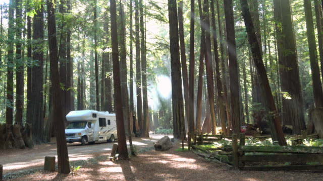 Camping in the California Redwood Forest
