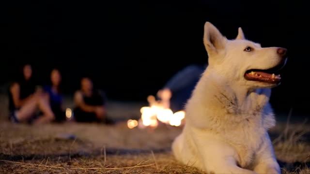 vídeos y material grabado en eventos de stock de camping con perro - expresión facial