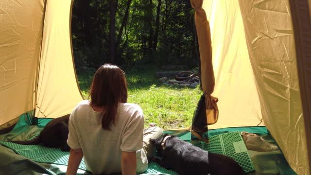 vidéos et rushes de camping avec des chiens - être à l'ombre