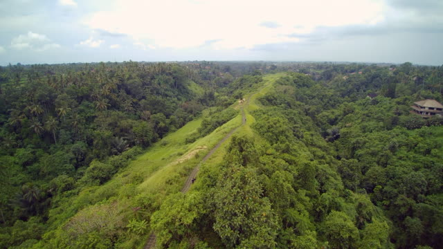 campuhan ridge walk ubud bali - campuhan stock videos & royalty-free footage