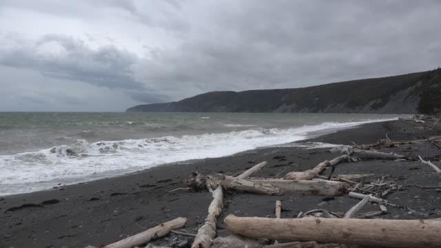 Canada Bay of Fundy driftwood on beach