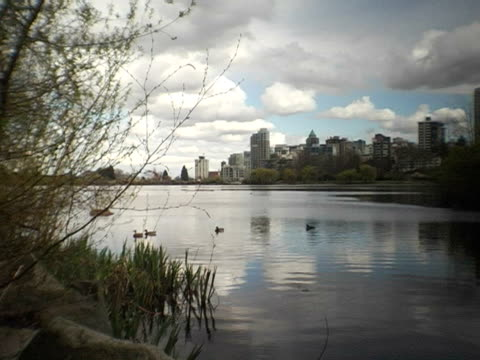 ws, canada, british columbia, vancouver, stanley park, ducks swimming in pond, city skyline in background - vier tiere stock-videos und b-roll-filmmaterial