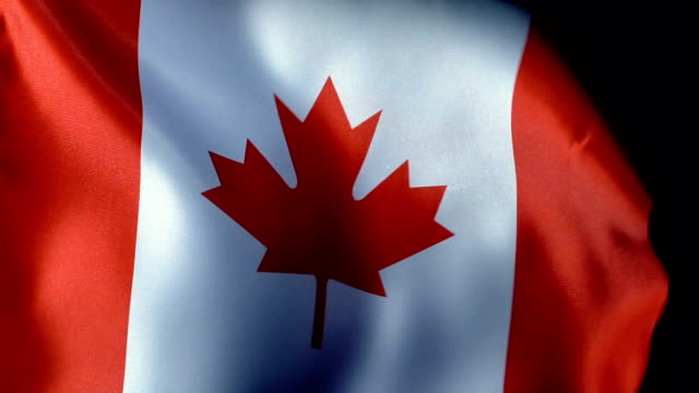 canada flag flapping - bandiera del canada video stock e b–roll