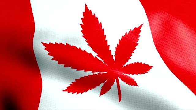 canada flag with cannabis leaf legalization - natural condition stock videos & royalty-free footage