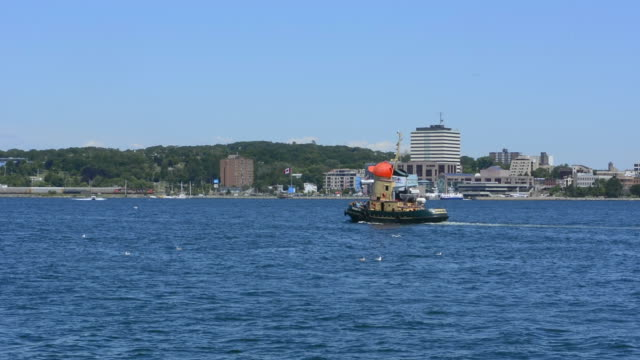 canada halifax  nova scotia harbour with boats and battleships with big bridge over water into city on mckay bridge - medium group of animals stock videos & royalty-free footage