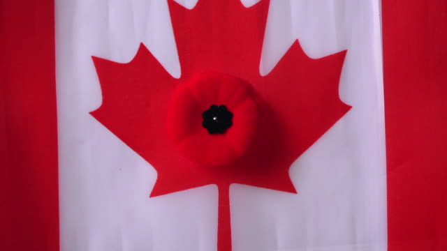canada memorial day: poppy flower pinned to a canadian flag - armistice day stock videos and b-roll footage