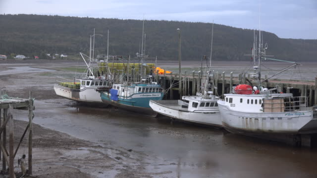 canada nova scotia boats by dock at low tide - low tide stock videos & royalty-free footage