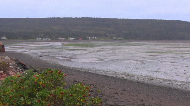 canada nova scotia low tide with edge of dock pan - low tide stock videos & royalty-free footage