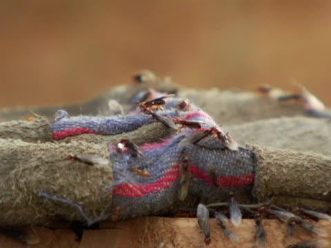 CU, SELECTIVE FOCUS, Canada, Ontario, Kitchener, Termites scurrying around gardening glove