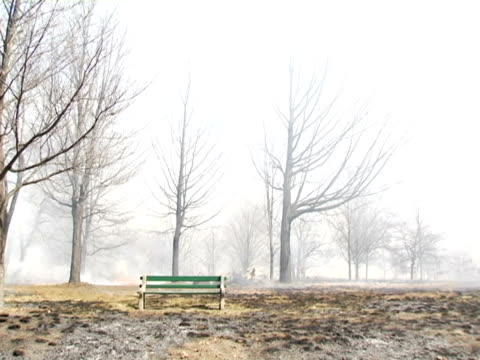 ws, canada, ontario, toronto, bench in burning park - placca di montaggio fissa video stock e b–roll