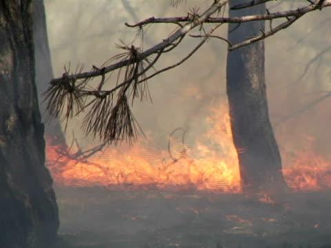 cu, canada, ontario, toronto, forest fire - ontario canada stock videos & royalty-free footage