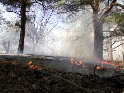 ms, canada, ontario, toronto, forest fire - ontario canada stock videos & royalty-free footage
