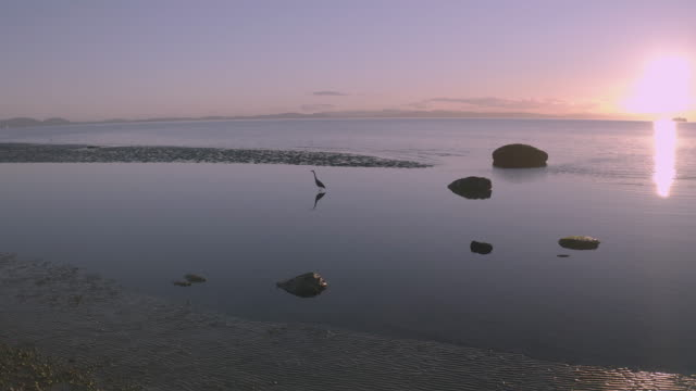 canada pacific coast sunset - pacific coast stock videos & royalty-free footage