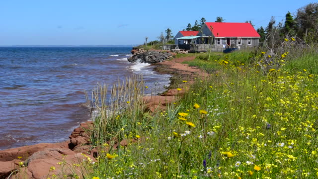 canada prince edward island, p.e.i. prim point shore and waves with red roof house in summer with wild flowers - wildflower stock videos & royalty-free footage