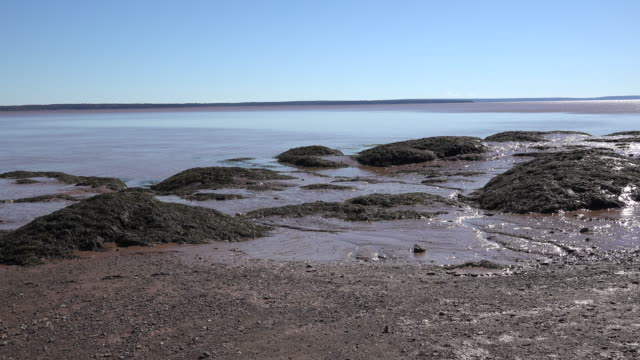 canada rocks and mud by the bay of fundy - low tide stock videos & royalty-free footage