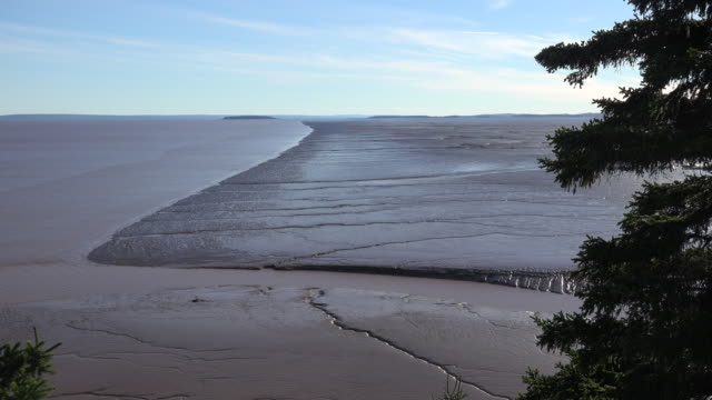 Canada tree and mud flats along the Bay of Fundy