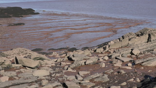 Canada water dropping at the Bay of Fundy pan