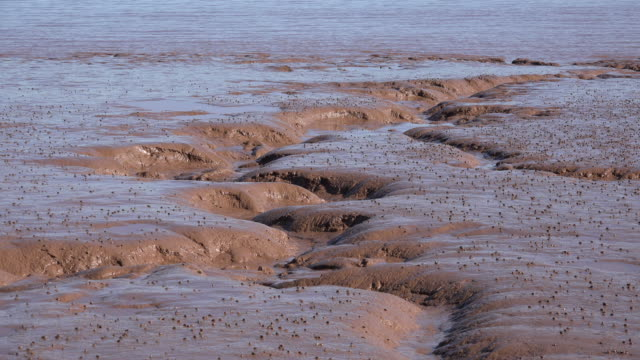 canada water laps on bay of fundy mud flat - mud flat stock videos & royalty-free footage