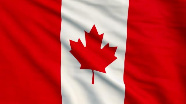 kanadas flagga animation - 4k - nationsflagga bildbanksvideor och videomaterial från bakom kulisserna