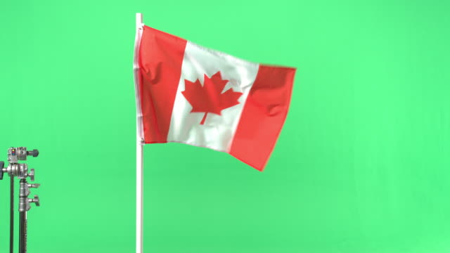 canadian flag on green screen - bandiera del canada video stock e b–roll