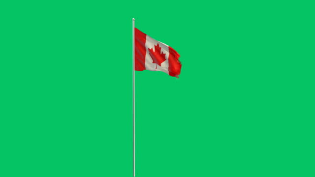 canadian flag rising - bandiera del canada video stock e b–roll
