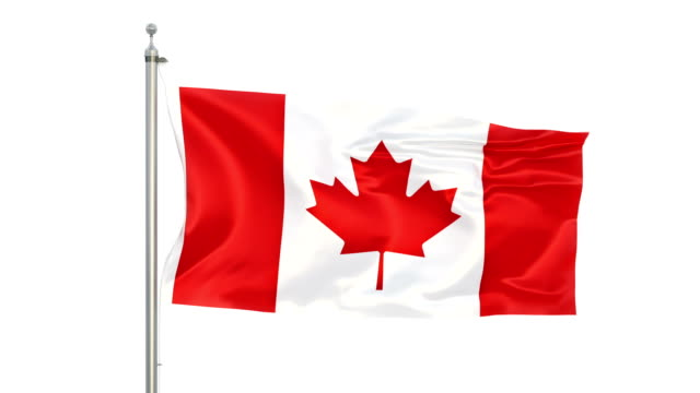 canadian flag stock video in matte - bandiera del canada video stock e b–roll