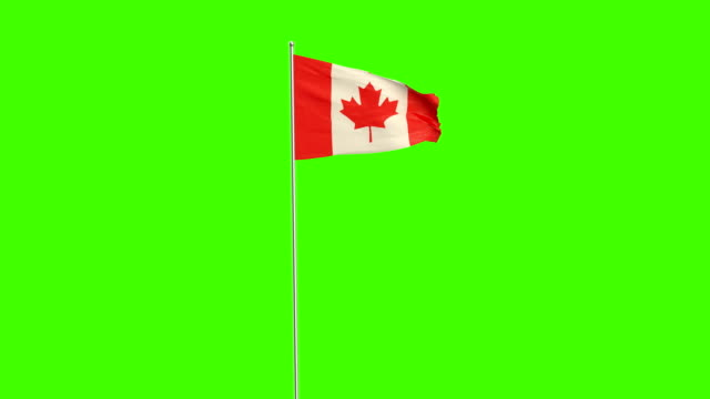 canadian  flag - bandiera del canada video stock e b–roll