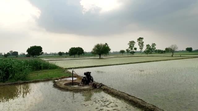 Kanaal van Water loopt door Rice Field