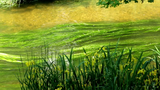 canal with flow of water - seaweed stock videos & royalty-free footage