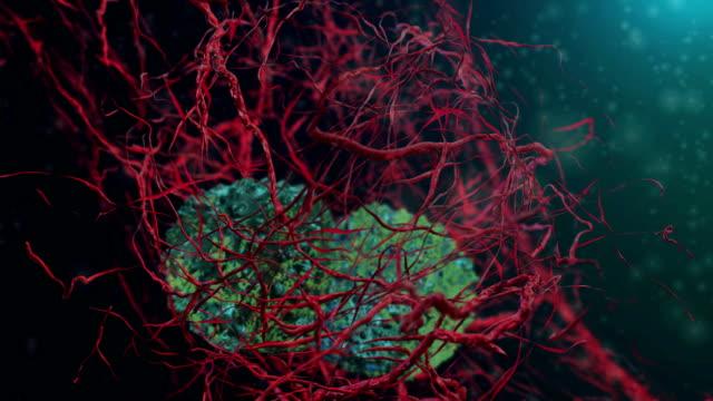 動物ガン細胞 - がん細胞点の映像素材/bロール