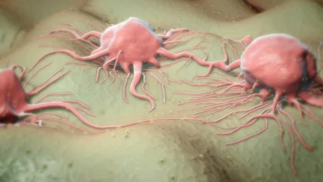 vidéos et rushes de cancer cells - autre thème