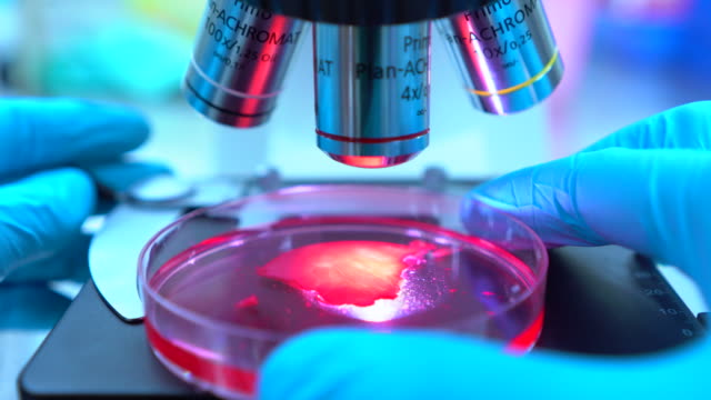 cancer research - laboratory stock-videos und b-roll-filmmaterial