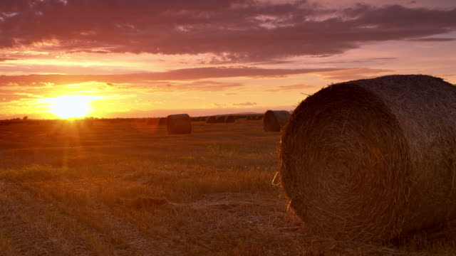 ds candid bale of wheat at sunset - fieno video stock e b–roll