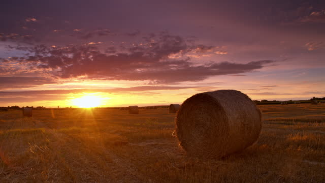ds candid field of bales at sunset - bale stock videos and b-roll footage