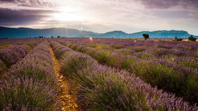 t/l candid shot of a cloudscape over lavender field - provence alpes cote d'azur stock videos & royalty-free footage