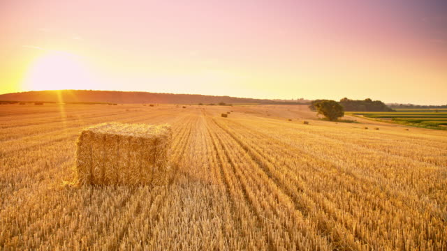 DS Candid shot of wheat bales at sunset