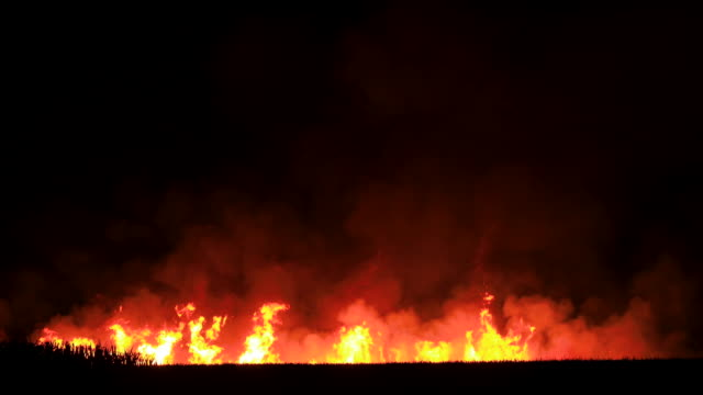 cane fields burning before harvest, nsw - australia stock videos & royalty-free footage