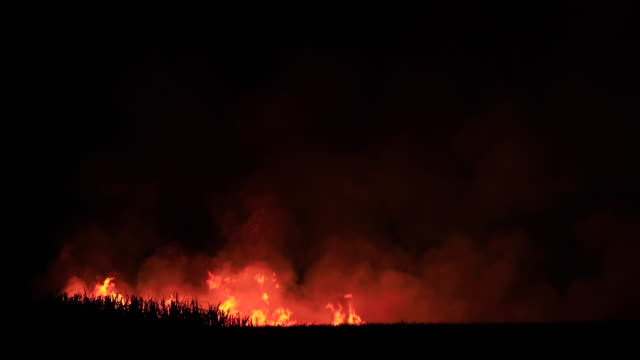 cane fields burning before harvest, nsw - stubble stock videos & royalty-free footage
